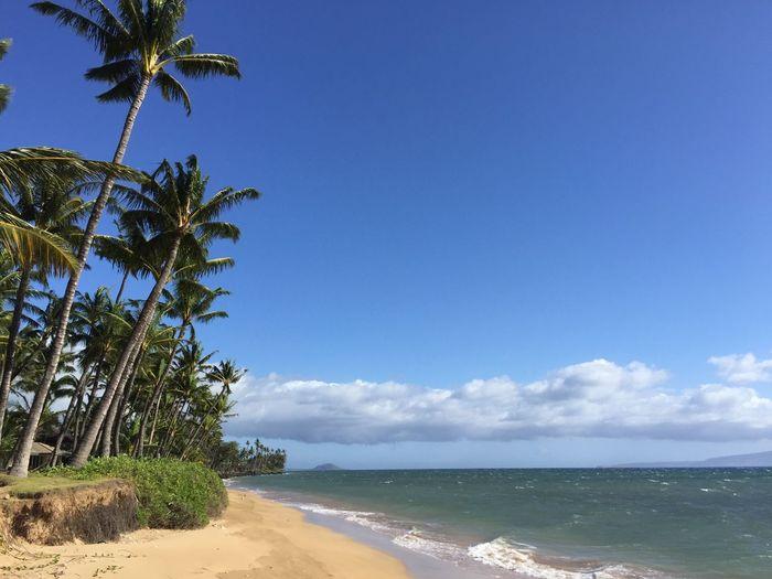 Maui beach 🏝