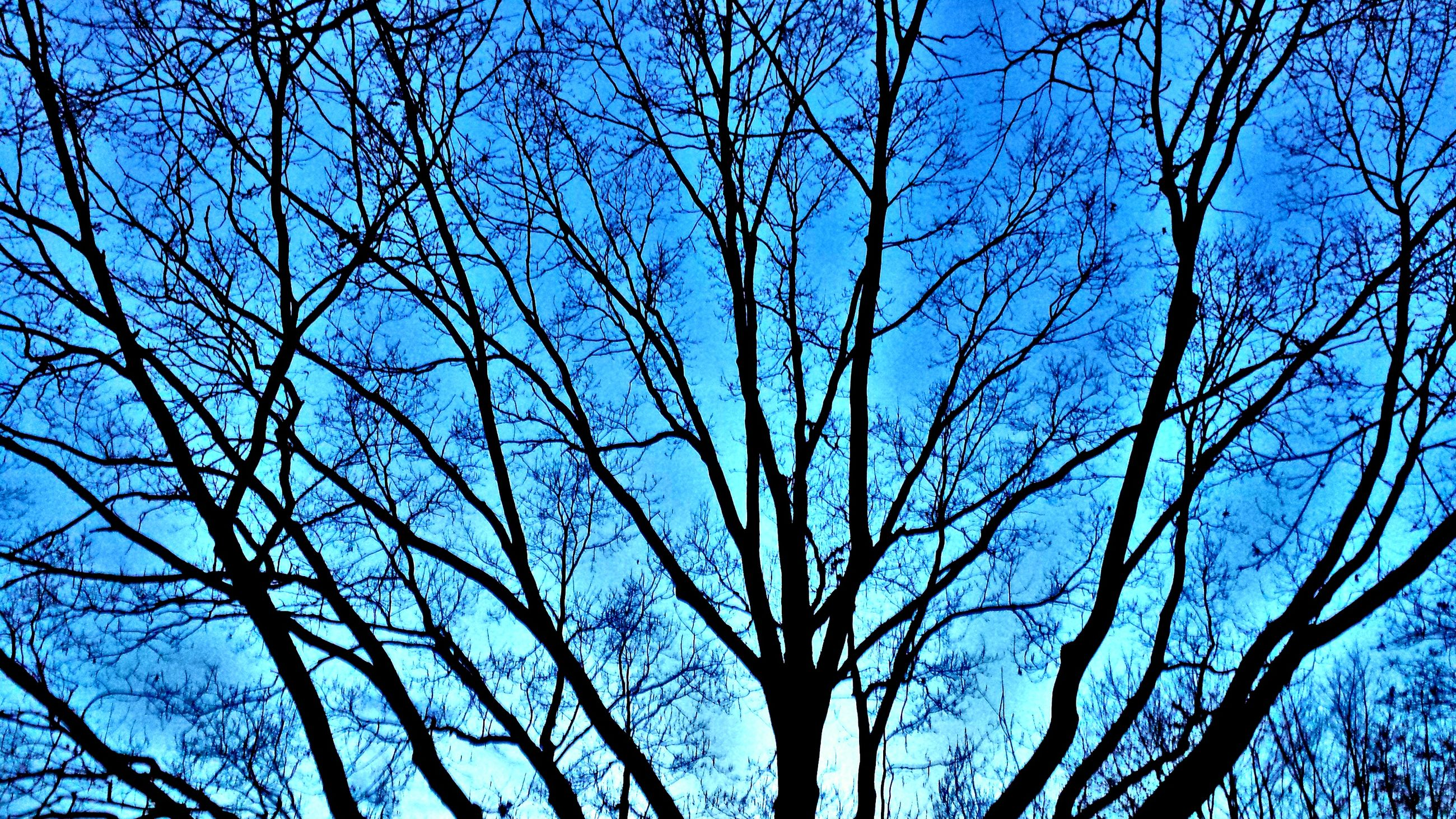 tree, low angle view, nature, sky, growth, branch, no people, outdoors, beauty in nature, tranquility, bare tree, day