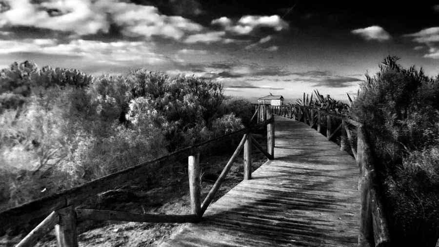 Iphonephotographyschool Iphonephotography Greenery Beach Path Clouds Clouds And Sky Blackandwhite