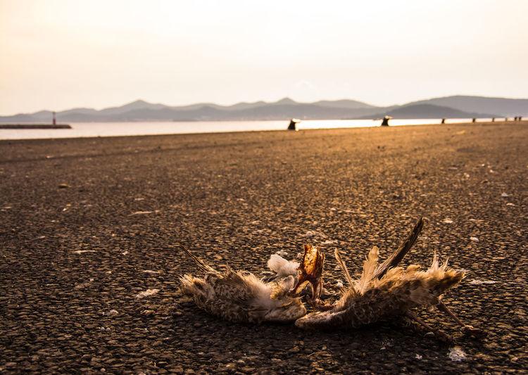 Dead bird on field against sky