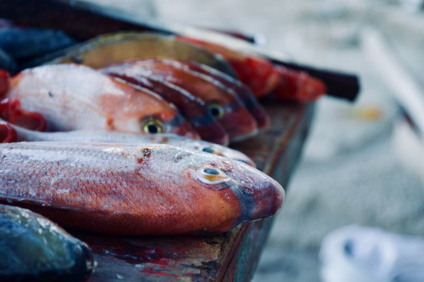 Fish Market Guarapari Seafood Animal Fish Fish Market Fishing Fishing Industry Food Food And Drink For Sale Freshness Healthy Eating Market Omega 3 Omega 3 Fatty Acids Raw Food Retail  Sea Seafood Still Life Vertebrate Wellbeing