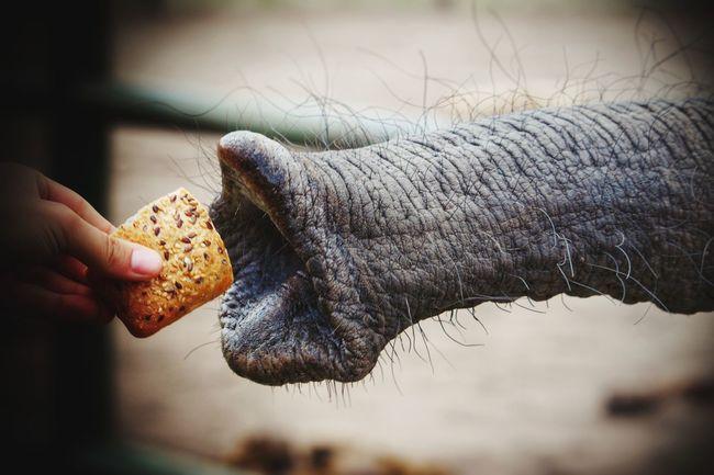 Animal Animal Feeding Elephant Elephant Feeding