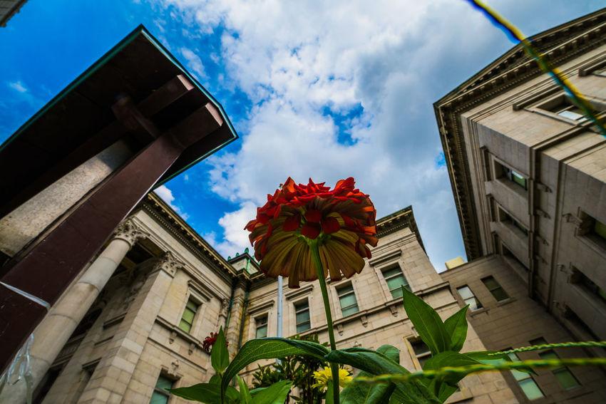 燃えない花火。 Flower Wideangle Red Sky Blue Blue Sky Beautiful Nikon Urban Gardening