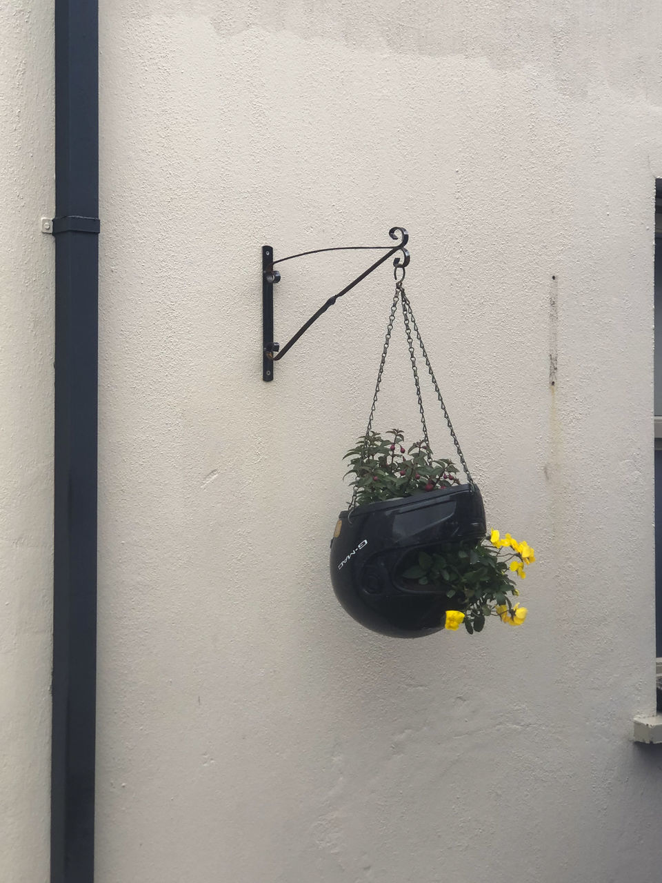 CLOSE-UP OF POTTED PLANT HANGING AGAINST WALL