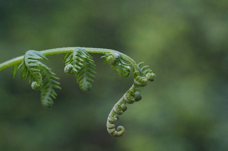 Beauty In Nature Close-up Day Fern Focus On Foreground Green Color Leaf Nature No People Outdoors Plant