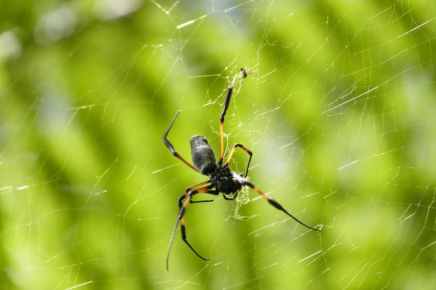 Animal Leg Animal Themes Animal Wildlife Animals In The Wild Close-up Complexity Day Focus On Foreground Fragility Insect Nature No People One Animal Outdoors Spider Spider Web Survival Web