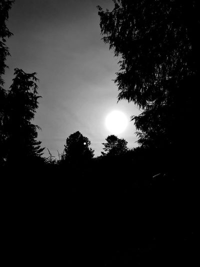 How to make the sun eerie using nothing but a Huawei P9 Silhouette Low Angle View Tranquil Scene Sun Tree Tranquility Dark Sky No People