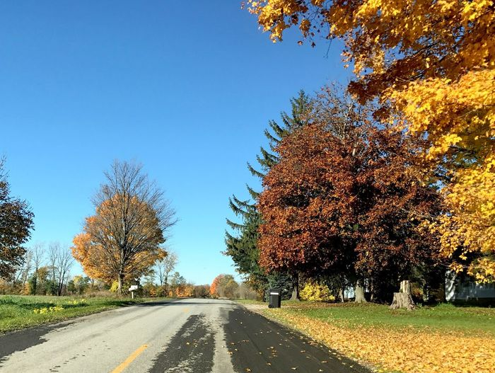 IPhone Only Unedited Vanishing Point Diminishing Perspective Country Road Autumn Colors