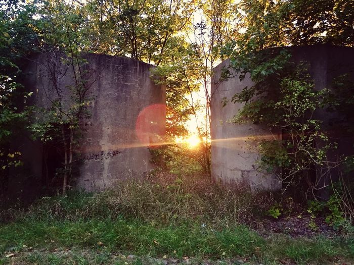 Tree Sunbeam Sunlight Day No People Nature Growth Outdoors Beauty In Nature Scenics Grass Architecture Sunset Sunbeams