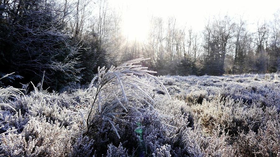 Trupbacher Heide Winter Outdoors Cold Temperature Nature Dezember 2016 Morning EyeEm Best Shots EyeEm Nature Lover EyeEmNewHere The Great Outdoors - 2017 EyeEm Awards