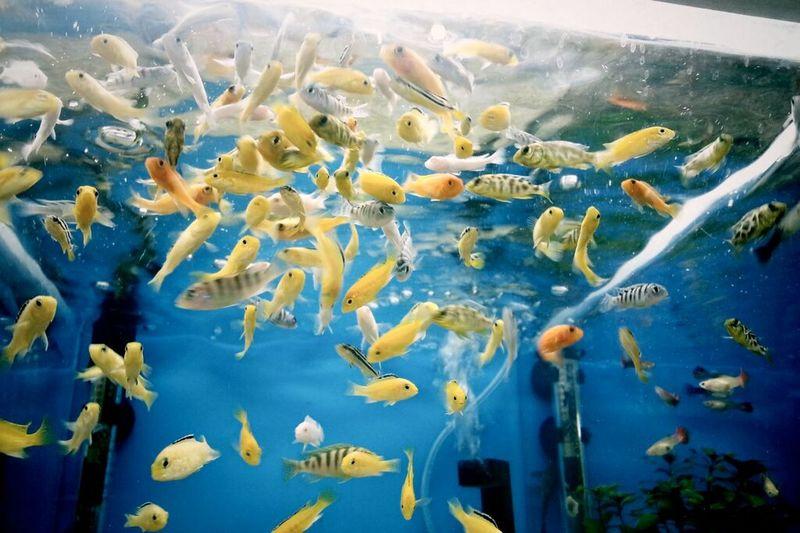 홈플에있던물고기 Hi!