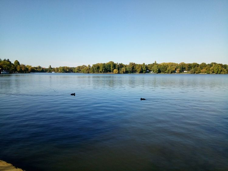 Water Blue Tranquility Tranquil Scene Clear Sky Waterfront Lake Scenics Rippled Swimming Nature Beauty In Nature Non-urban Scene Day Outdoors Calm No People Tourism Ducks Duck On Lake Duck