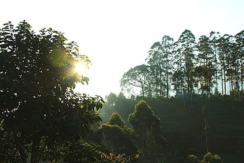 Amateurshot Nature Sunset Hello World First Eyeem Photo Cihanjuang Bandung INDONESIA Lights Hiking