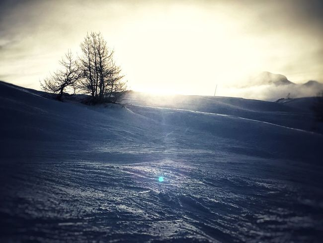 Les Orres Skiing Cold Temperature Winter Snow Nature Beauty In Nature Tree Weather Bare Tree Tranquility Tranquil Scene Frozen Outdoors No People Landscape Scenics Sky Snow Covered Day Cold Lone Skiing Piste Lesorres Mountain Mountains