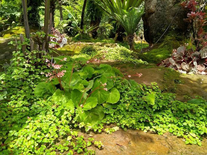 Scenic view of lake amidst plants