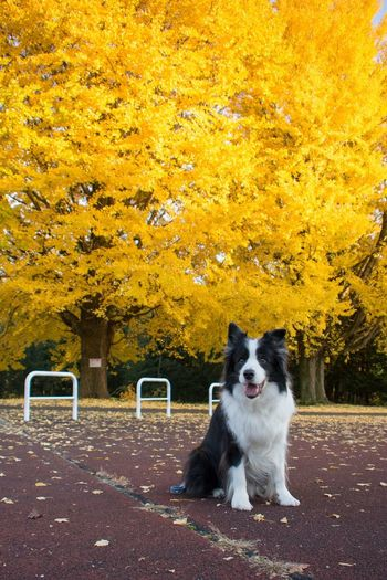 Dog sitting in park during autumn