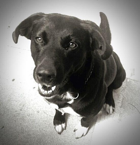 I S2 Dogs! Lovedogs Lovepet♥