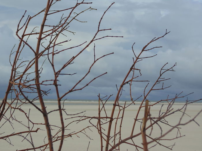 Beach Beauty In Nature Cloud - Sky Day Dried Plant Nature Outdoors Tranquility