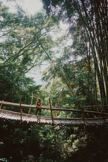 Bridge Rainforest Bamboo Green Vegetation Outdoors Nature Beauty In Nature Forest Girl Young Woman Hiking Adventure Lush Greenery Traveling ASIA INDONESIA Flores Wae Rebo Hat Tropical Paradise Exploring Travel Destinations Day Lost In The Landscape An Eye For Travel