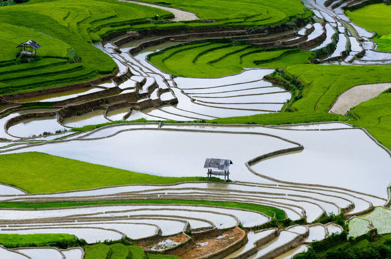 Beautiful terraced rice field in water season in Mu Cang Chai, Vietnam Asian  Bali Farmer Plant Travel Vietnam Agriculture Crops Culture, Destination Ecology Environment Farm, Growth Havesting Landscape Landscapes Mu Cang Chai Nature Plant Resourcemag Sapa Vietnam Soil Terraced Water