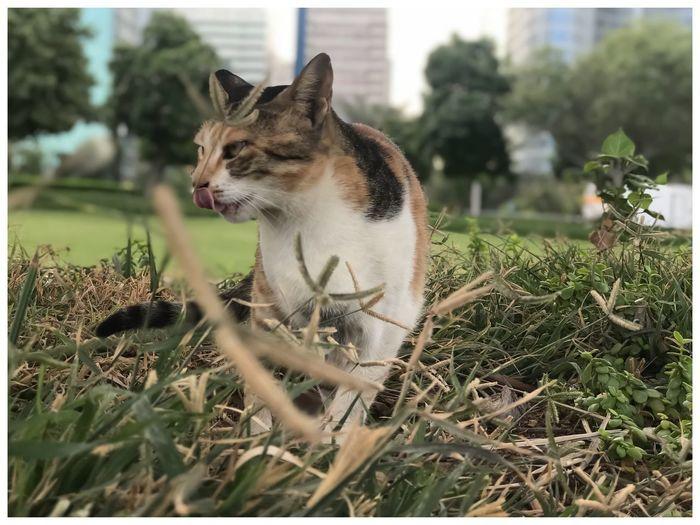 Stray Cat One