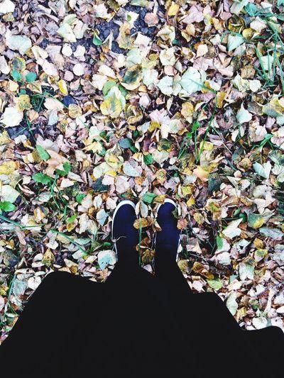 Autumn Colors Park Colors Of Autumn Autumn Parks Ryazan' Autumn🍁🍁🍁 Ryazan Fall Beauty