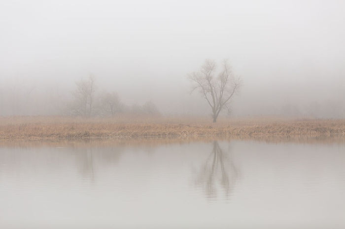 Calm Bare Tree Beauty In Nature Day Environment Fog Lake Landscape Nature No People Non-urban Scene Plant Reflection Scenics - Nature Sky Spring Tranquil Scene Tranquility Tree Water