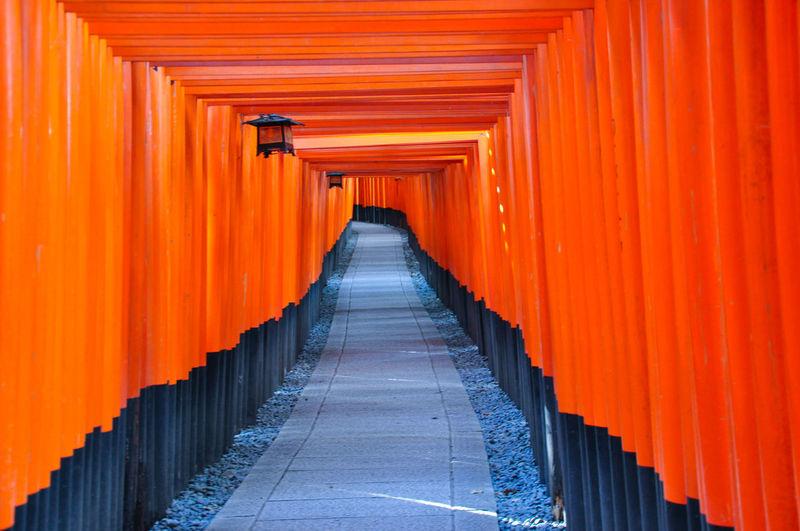 One thousand torii
