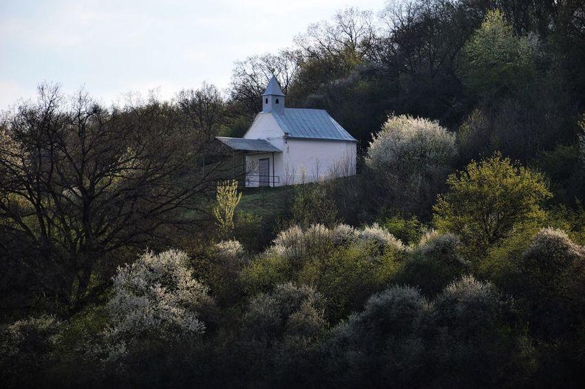Chapel in the nature 😊 Nature Architecture Chapel Chapelhill