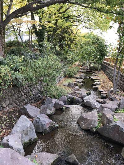 城址、掘割、引き込み、、 Plant Nature No People Day Growth Tree Sunlight Rock Rock - Object Water