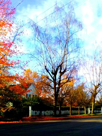 Building Exterior Tree Sky Nature Architecture Built Structure Outdoors Bare Tree Beauty In Nature Cloud - Sky Growth Autumn Branch Day Tranquility I LOVE PHOTOGRAPHY Yamhill County The Week On EyeEem Fall Collection Focus On Foreground City The Way Forward Telling Stories Differtenly Architecture A Dash Of Magic