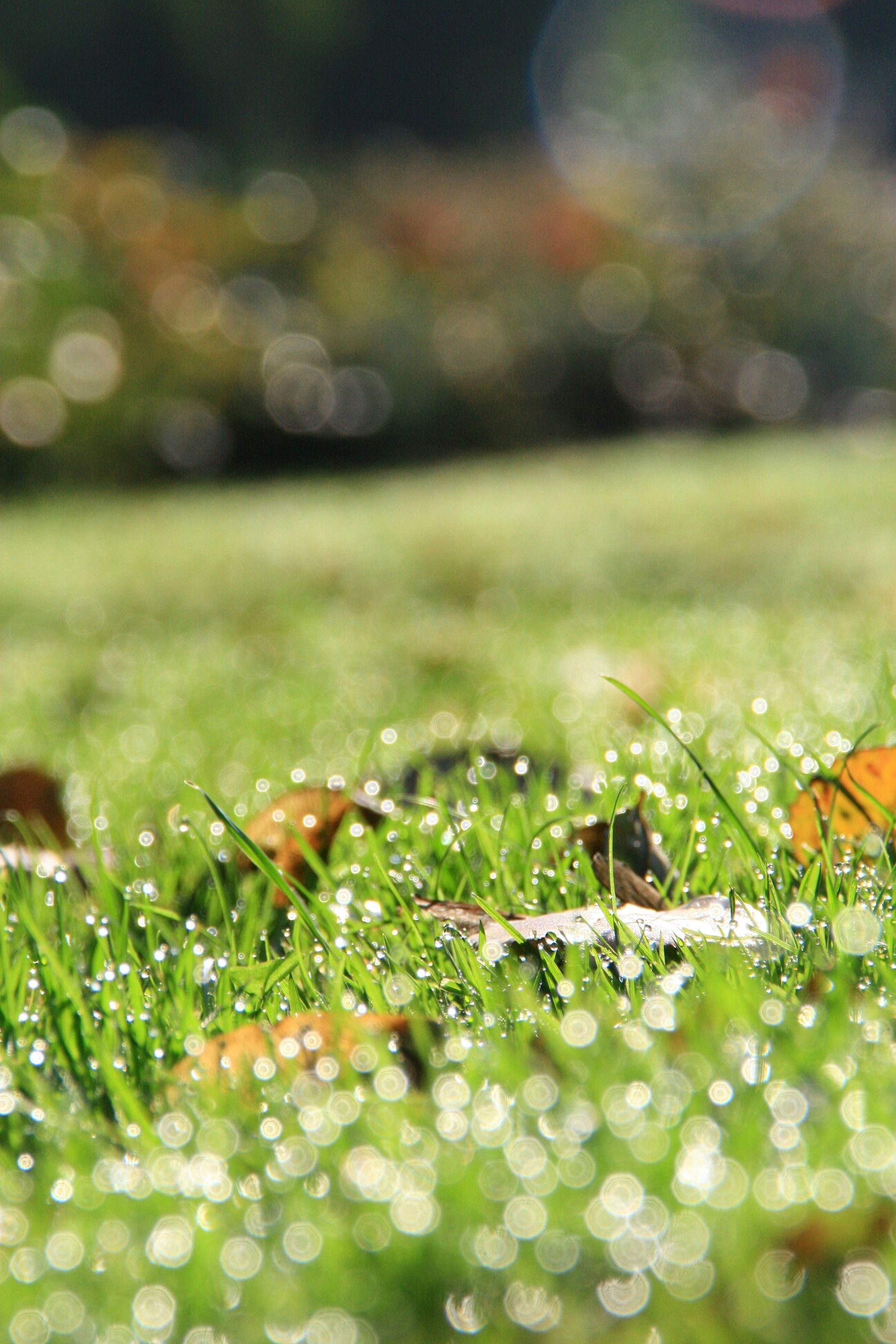 focus on foreground, close-up, green color, selective focus, drop, grass, plant, nature, leaf, growth, fragility, wet, beauty in nature, water, day, field, blade of grass, outdoors, season, spider web