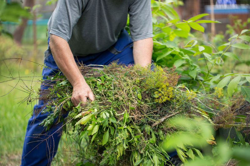Midsection of man holding plants outdoors