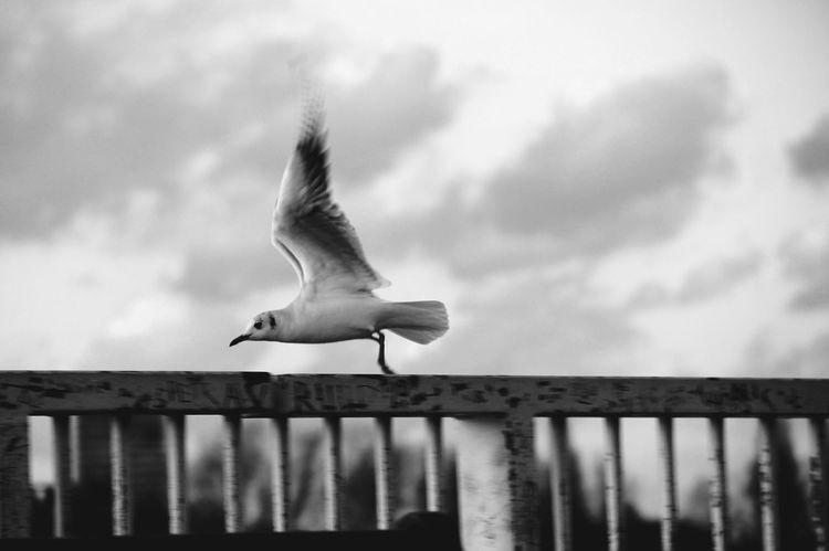 Shades Of Grey Sky Belgium Schelde Free Bird Long Goodbye