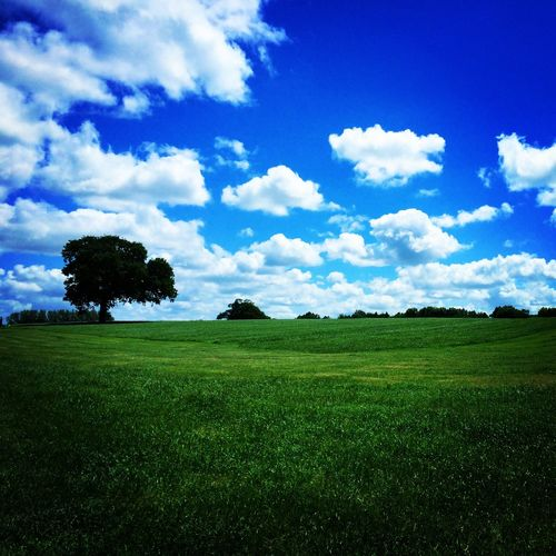 Tree Field Bluesky IPSWebsite Ips IPSLandscape IPhoneography IPhone Photography