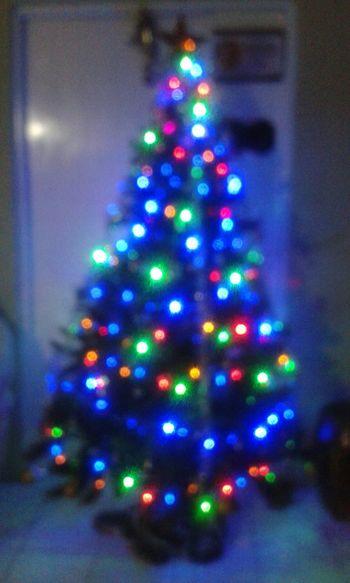 joy to the world! Merry Christmas 🎄🔔🎉 Merry Christmas Christmas Christmas Tree Christmas Lights Christmas Spirit