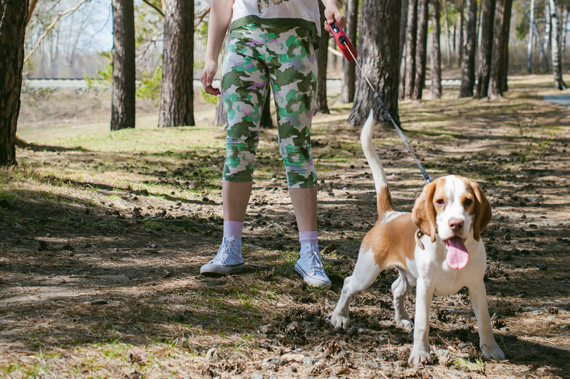 Low section of woman with dog at park