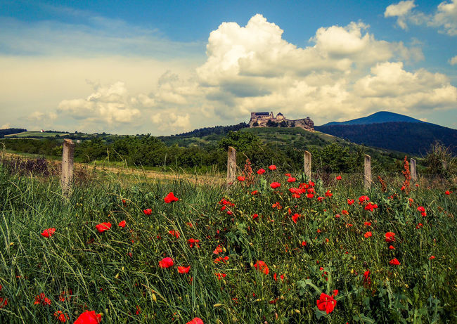Boldogkőváralja Hungary Castle Restaurant Summer Summer Views Poppy Flowers Photography Lovely Place Atmosphere Walking Around Taking Pictures Red Flower Taking Photos Relaxing Enjoying Life Memories Walking Around Popular Photos Popular Photo Medieval Historical Place Galery Holiday Picture
