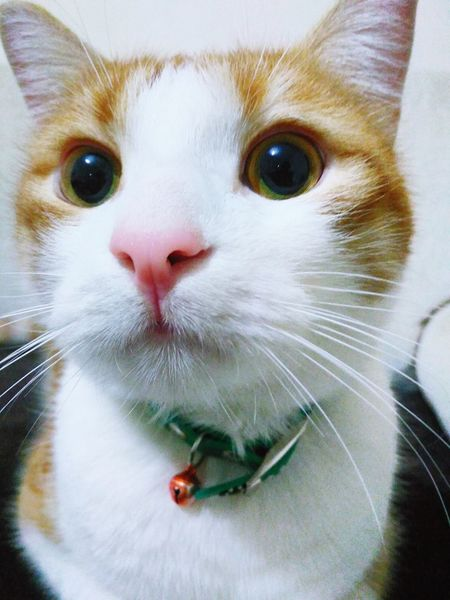First Eyeem Photo Cat Kedi Aşkı Kedicik Kedi