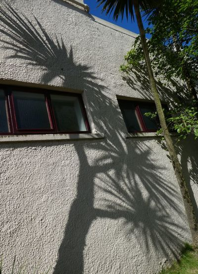 Stornoway shadow tree Scotland Shadow VisitScotland Shadows & Lights Built Structure Architecture Building Exterior Shadow Sunlight Building Nature Day Plant Tree Low Angle View No People House Window Outdoors Growth Sunny Residential District Pattern