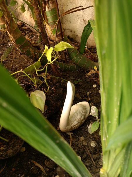 Nature Plants Pato