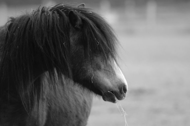 Animal Head  Animal Themes Close-up Day Domestic Animals Focus On Foreground Horse Livestock Mammal Nature No People One Animal Outdoors Pets Water Black And White Friday