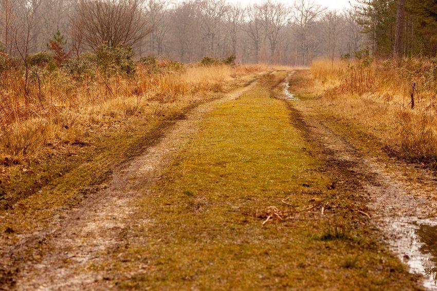 Forest track Forest Track Track Field Nature Landscape Outdoors Day No People Agriculture Scenics Beauty In Nature Tree Rural Scene Sky