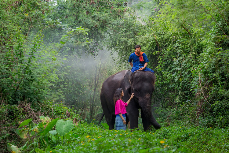 Man sitting on elephant while woman standing on land in forest