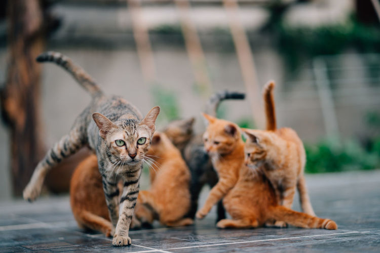 Mammal Cat Feline Animal Themes Group Of Animals Animal Pets Domestic Cat Domestic Domestic Animals Focus On Foreground Two Animals No People Vertebrate Young Animal Sitting Kitten Portrait Day Tabby Animal Family Whisker