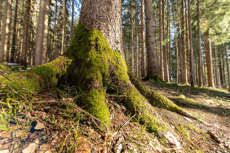 Nature Photography Plant No People Nature Day Outdoors Tree Trunk Mossy Tree