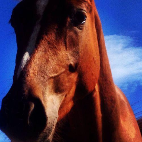 I Love Horses My Horse Horse Horses