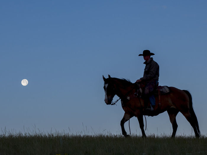 Cowboy riding horse on field against sky