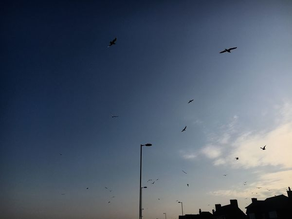 Flying Bird Clear Sky Seafront First Eyeem Photo