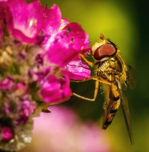 Insect Flower Close-up Beauty In Nature Pink Color Nature Plant Pollination Macro Insects Nikonphotography